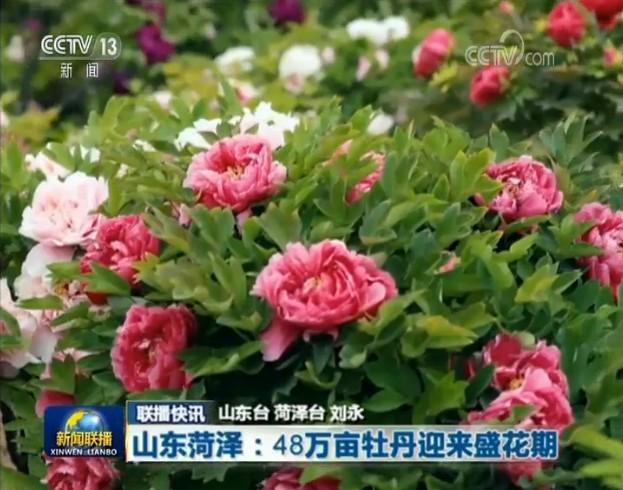 《新闻联播》再次报道菏泽牡丹