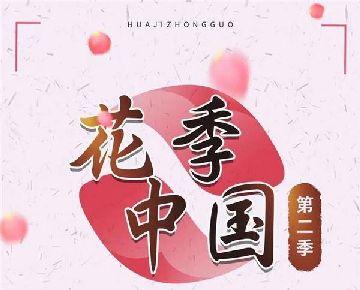 央视纪录片《花季中国》菏泽牡丹茶的研制和生产