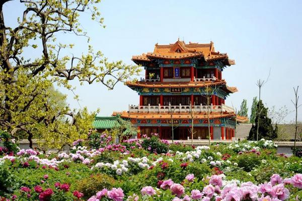 菏泽曹州牡丹园全面升级 迎接游客到来
